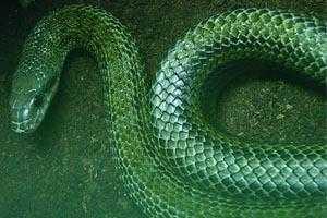 Elever le Serpent intérieur